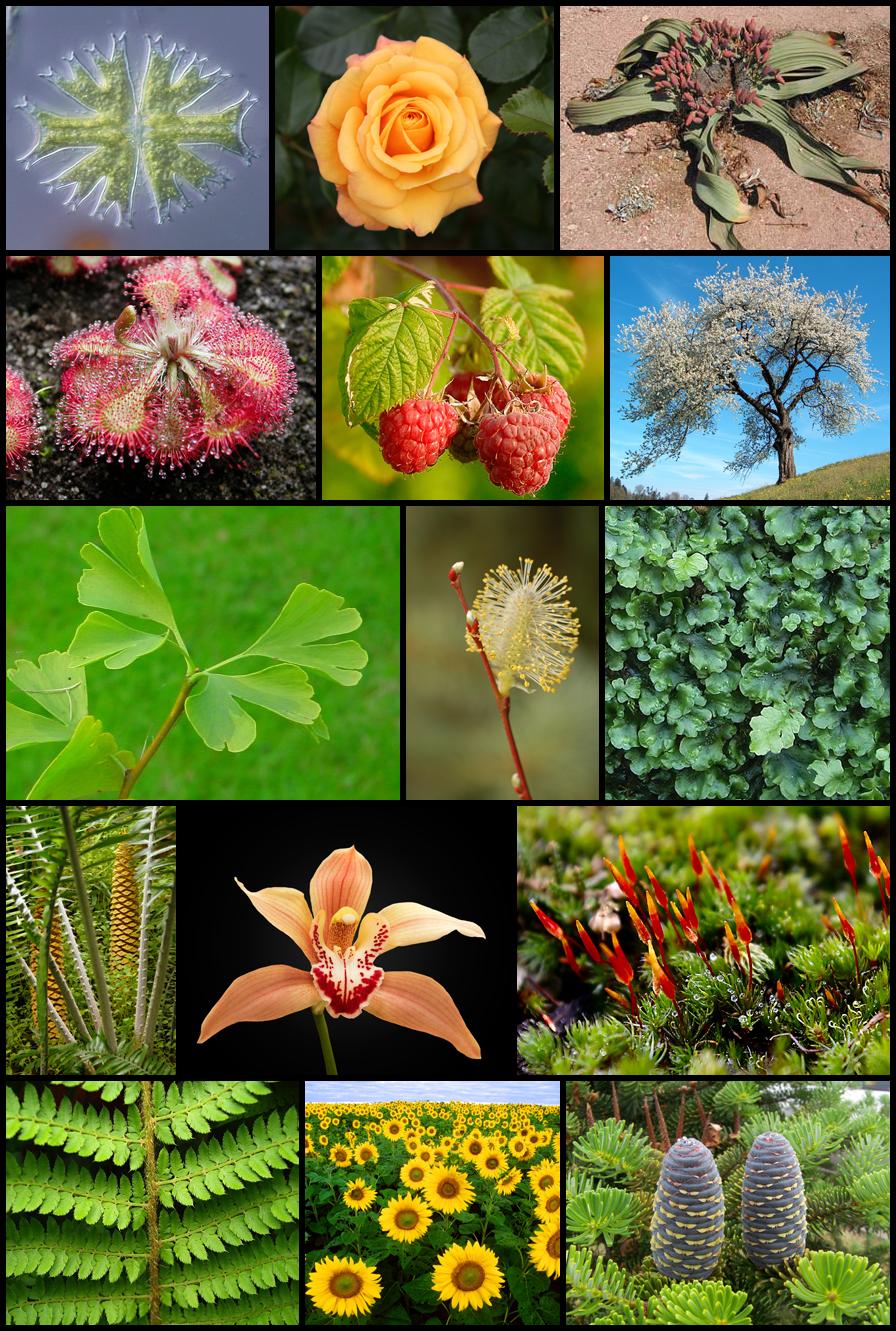 Auf dem Bild sind verschiedene Pflanzen zu sehen