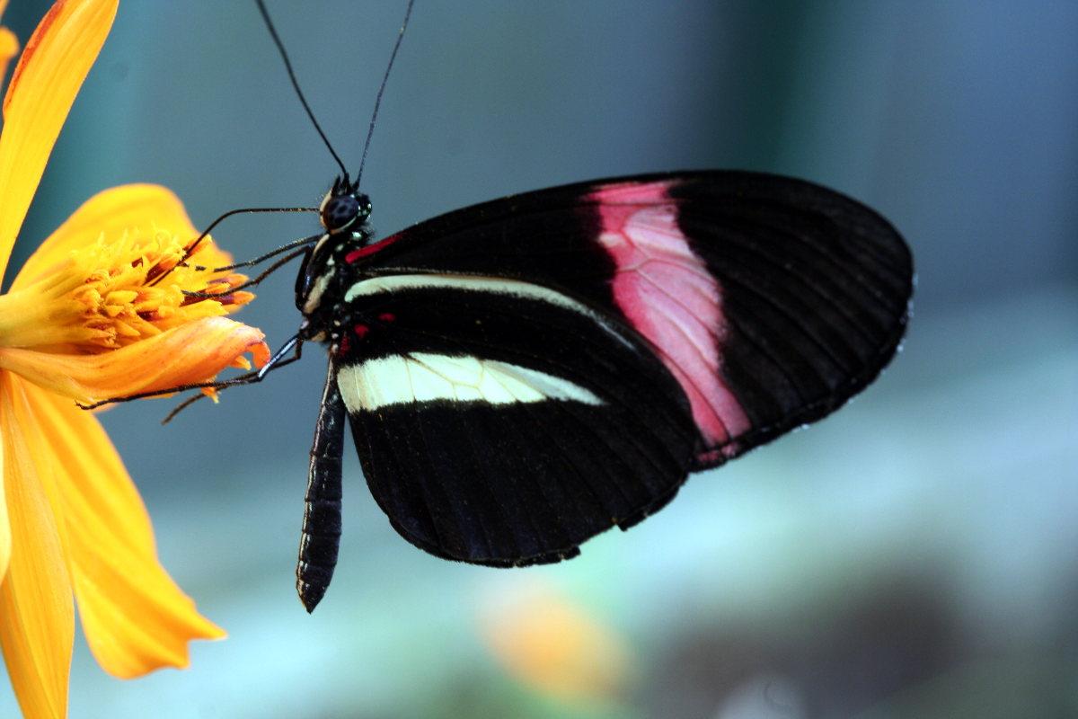 Auf dem Bild ist ein Schmetterling. Ein Schmetterling ist ein Insekt.