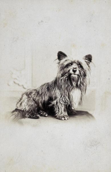 Auf dem Bild ist der Hund Greyfriars Bobby zu sehen