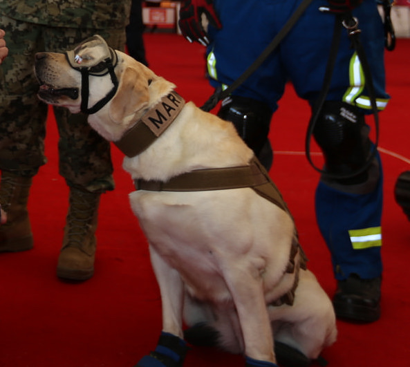 Frida rescue dog.jpg